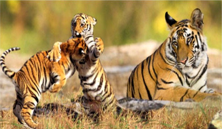 Sunderban Wildlife Tour Package