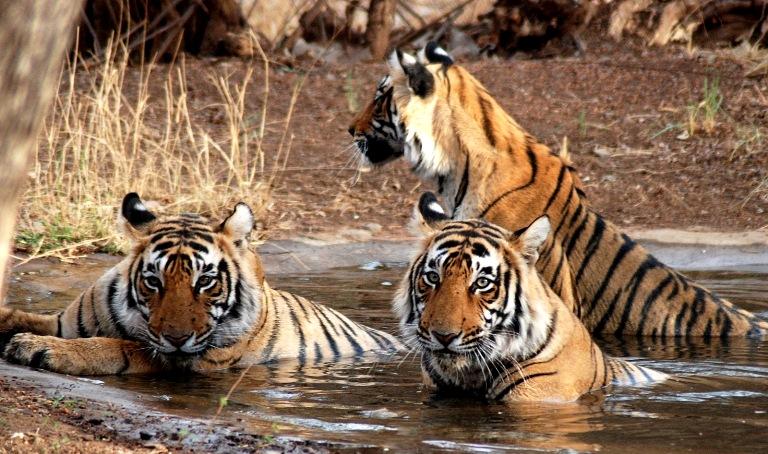 Sundarbans -National Park