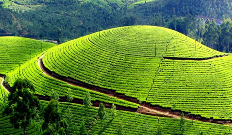 Magical Athirapally with Munnar