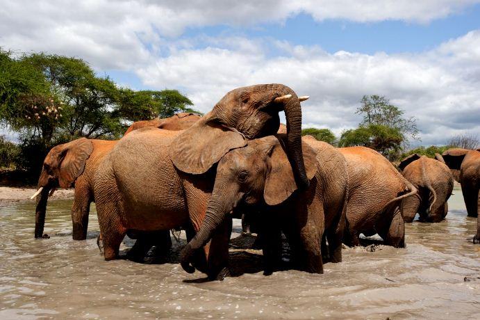 India -Wildlife Tour