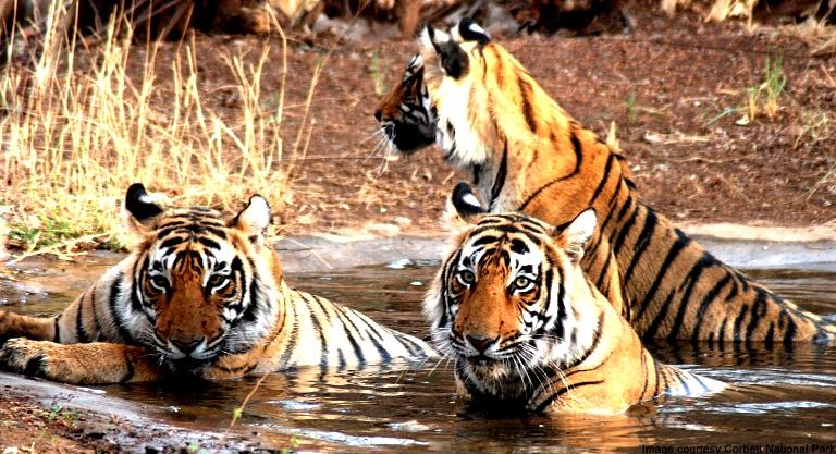 Rajasthan -Jungle Tour