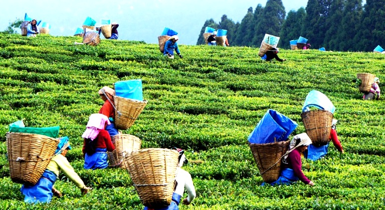 Assam -Tourist Places